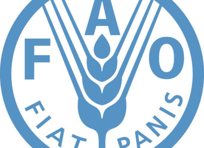 Stage presso la FAO