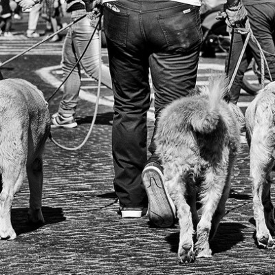 Live[ING] in Arezzo: Dogs