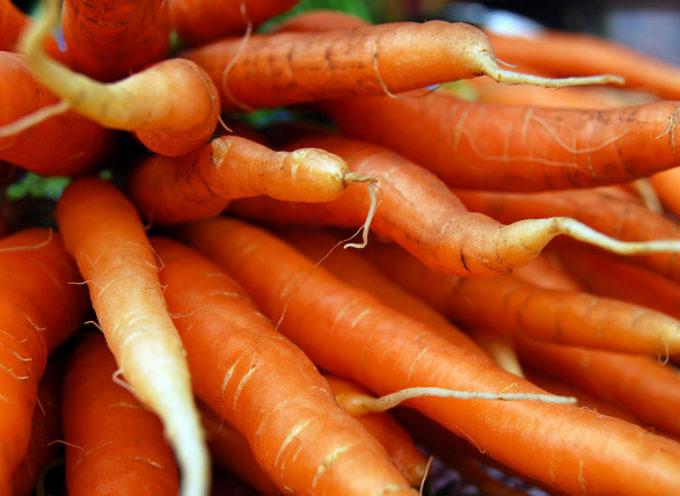 Sei un giovane imprenditore agricolo?Partecipa agli Oscar Green di Coldiretti!