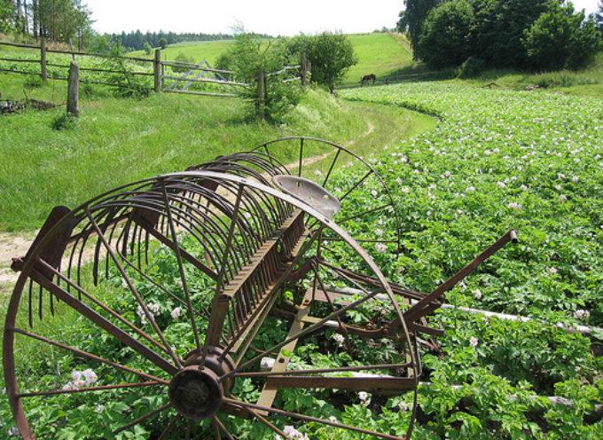 Premi di Studio CNR per tesi e dottorati sull'innovazione in agricoltura