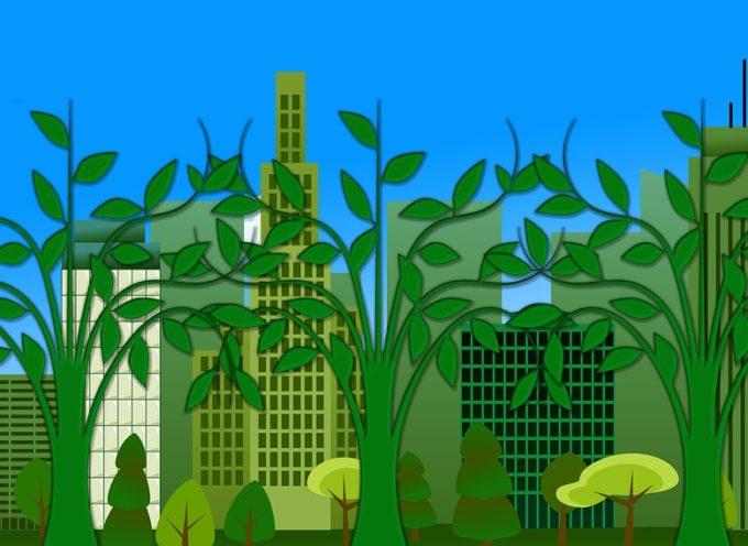1000 Borse della Fondazione Heinrich Böll su ecologia, sostenibilità, diritti.
