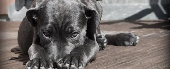 Corso di Formazione per operatori e conduttori di Pet Therapy