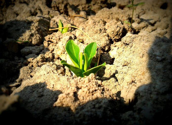 Ricerche sulla qualità del suolo in Scozia con il Natural Environment Research Council