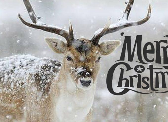Auguri di Buon Natale e Buone feste da InformaGiovani Arezzo