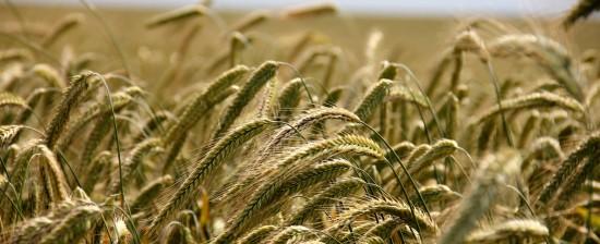 Alimenta2Talent: Idee per nuove imprese nel settore Agroalimentare