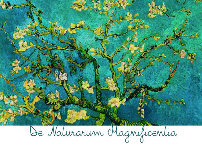 """De Naturarum Magnificentia"": Open Call per artisti"