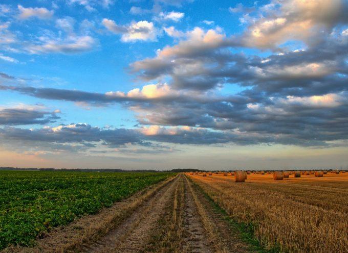 11 Borse a diplomati sulla tutela dell'agro-alimentare