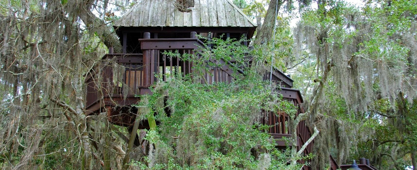 Costruire case sugli alberi con terni festival si pu - Costruire case sugli alberi ...