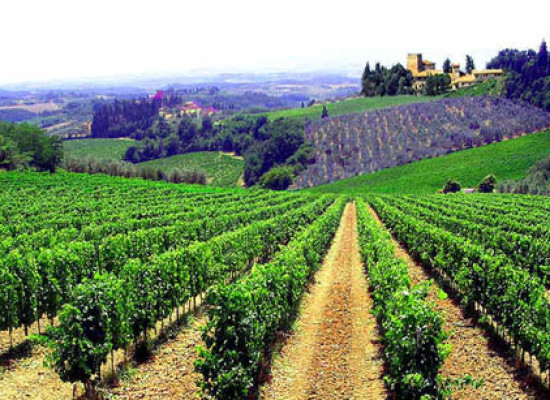 Speciale Cliclavoro: le professioni del settore vitivinicolo