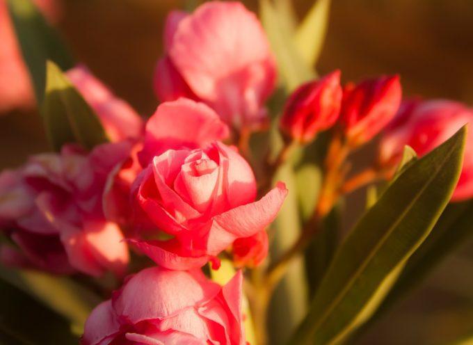 """""""Il Pane e le Rose"""": una giornata per promuovere la cultura del volontariato attraverso l'agricoltura sociale"""