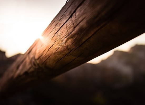 """Premio di Laurea """"Nardi Berti"""" su tecnologia del legno o utilizzo dei legnami locali"""