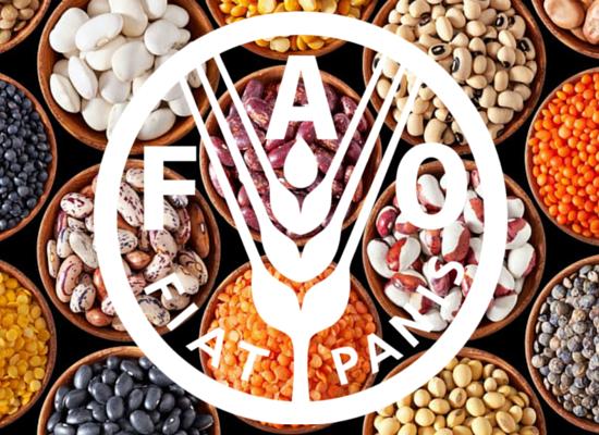LAVORARE PER: FAO – Food and Agricolture Organization