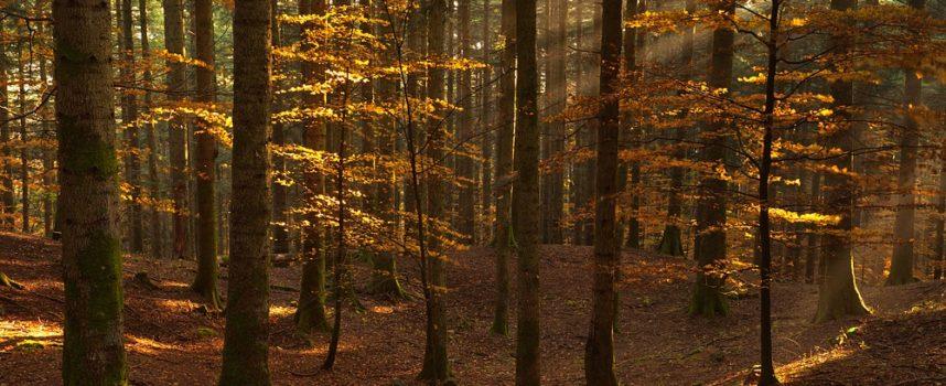 Riparte il volontariato al Parco Nazionale delle Foreste Casentinesi!