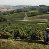 """Cantine Aperte: nelle cantine aretine per scoprire """"il bello della Toscana"""""""