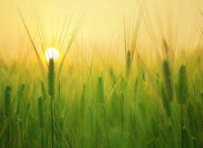 """Seminario conclusivo del corso di formazione """"Agrilogic – Tecnico della conduzione di impianti di trasformazione di prodotti vegetali"""""""