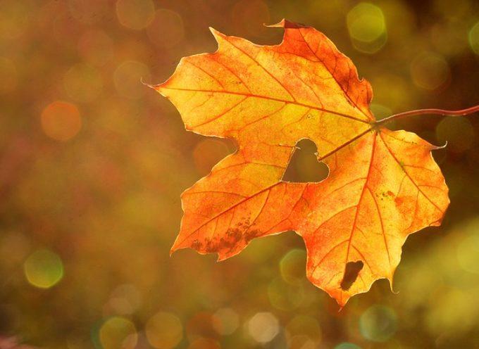Festival del Fall Foliage nel Parco delle Foreste Casentinesi: gli appuntamenti a Badia Prataglia