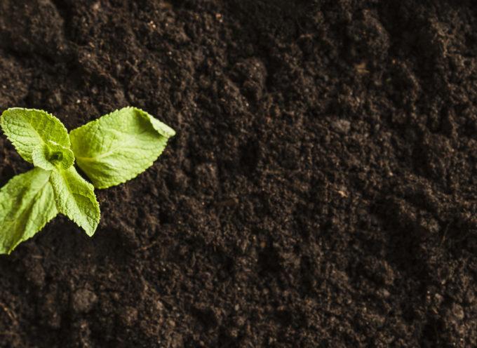Giovanisì: in attivazione bando per avviamento imprese agricole