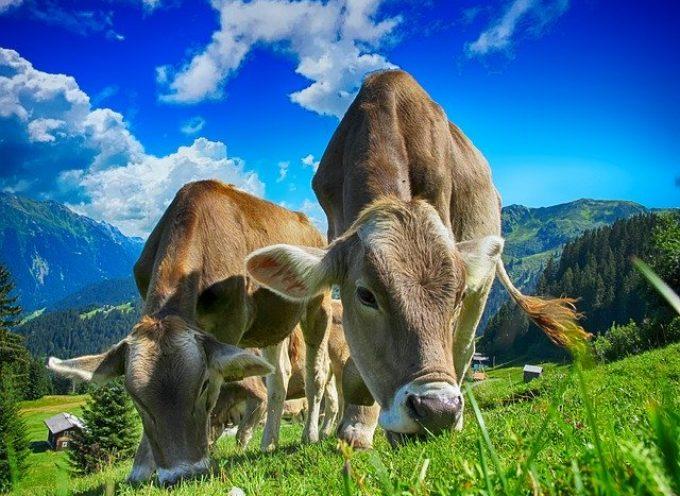 Lavoro stagionale nelle fattorie in Svizzera per ragazzi dai 16 ai 25 anni
