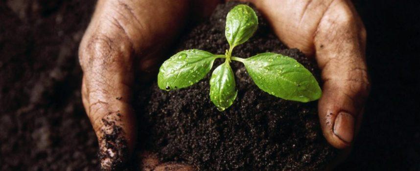 """Il """"Compost day"""": anche il compost diventa a chilometro zero"""