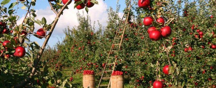 Percorso GRATUITO di accompagnamento all'autoimprenditorialità per l'Agribusiness