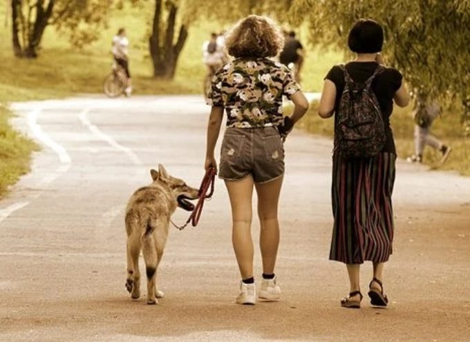 Comune di Arezzo: cani sempre al guinzaglio fino al 27 agosto