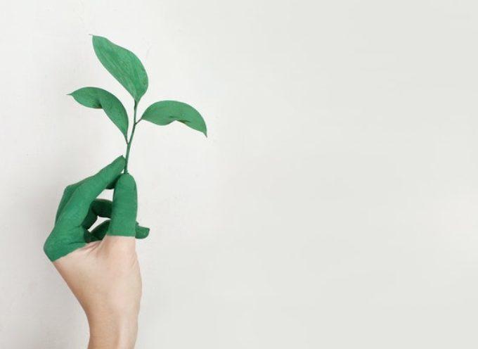Scambio culturale in Slovenia su natura e coscienza ecologica