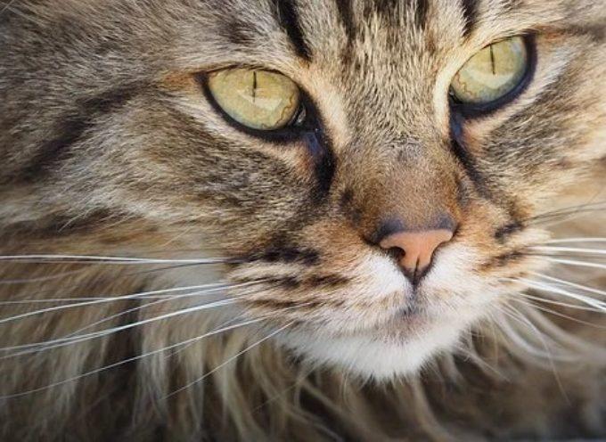 Comune di Arezzo: nuovo ordinanza di controllo anche sui gatti