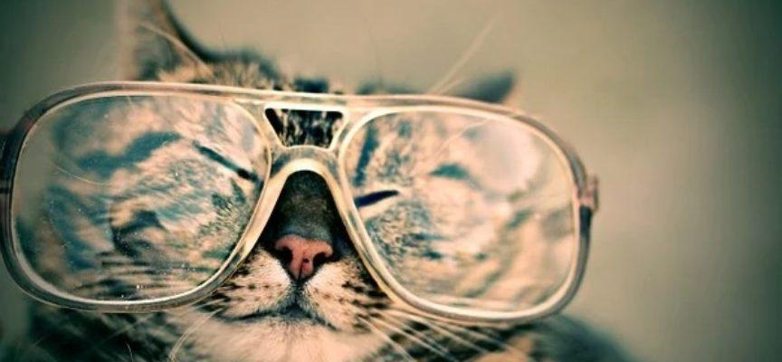 Nuove opportunità con NAU! occhiali, in Toscana a Lucca, Pistoia e Siena