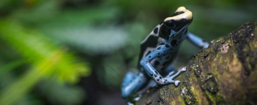 Monitoraggio della biodiversità nei siti natura 2000 con il progetto Life ESC360 (possibilità anche in Casentino!)