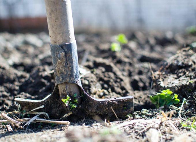 """""""Terra, piante e fantasia…"""" Progetto di volontariato su agricoltura biologica e sostenibilità ambientale"""