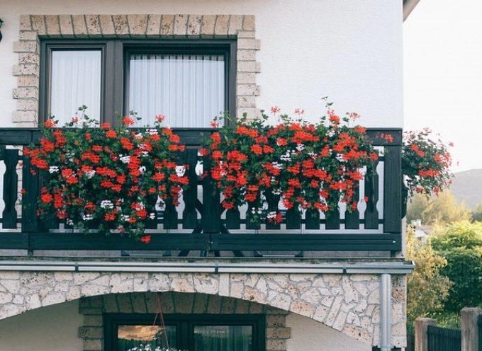 Promuovere biodiversità in città con balconi e terrazze fioriti