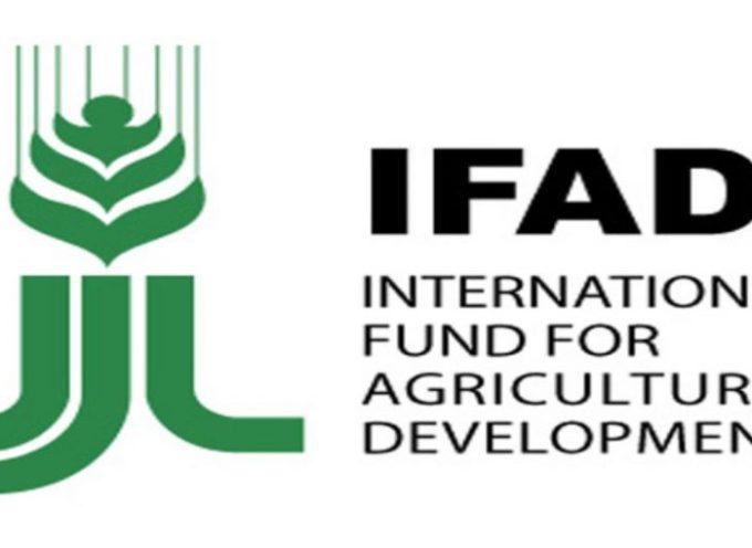 Stage retribuiti IFAD, Fondo Internazionale per lo Sviluppo Agricolo, per studenti e neolaureati