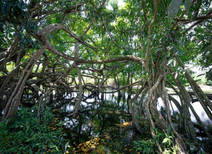 Biodiversità, due webinar promossi da ISPRA verso la Giornata del 22 maggio