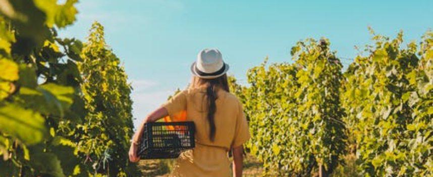 Greenprix 2021, il contest per le idee in ambito wine&agrifood