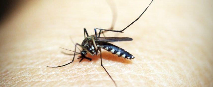 Quinto intervento notturno di disinfestazione dalle zanzare