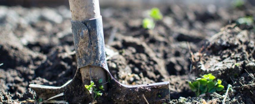 EURES: Cercasi lavoratori stagionali per azienda agricola nel nord della Francia