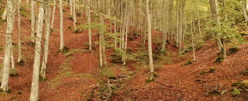 Turni di volontariato 2021 nel Parco delle Foreste Casentinesi, Monte Falterona e Campigna